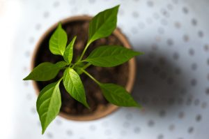young, plant, green
